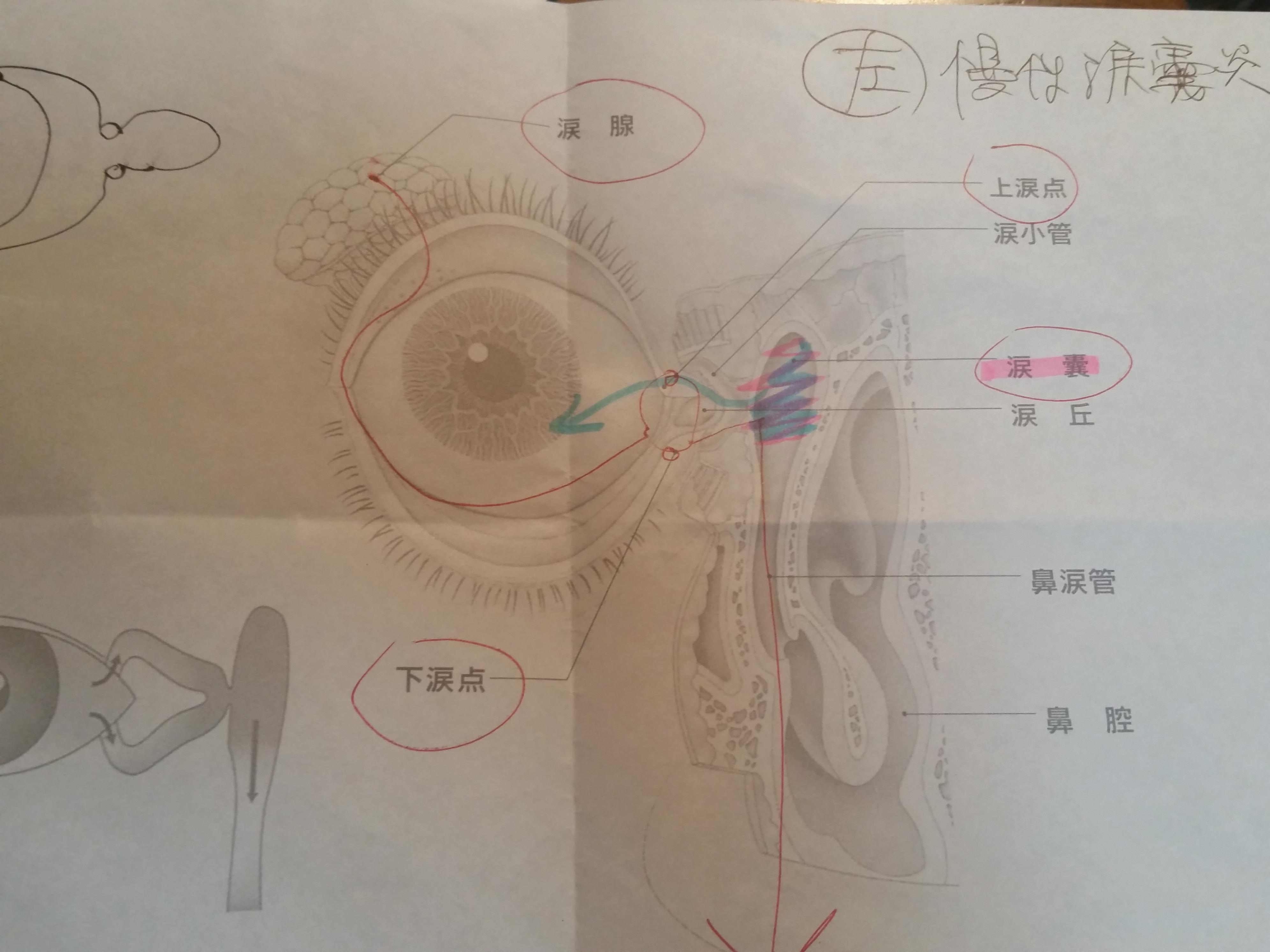 3軒目の眼科で判明した涙嚢炎という診断