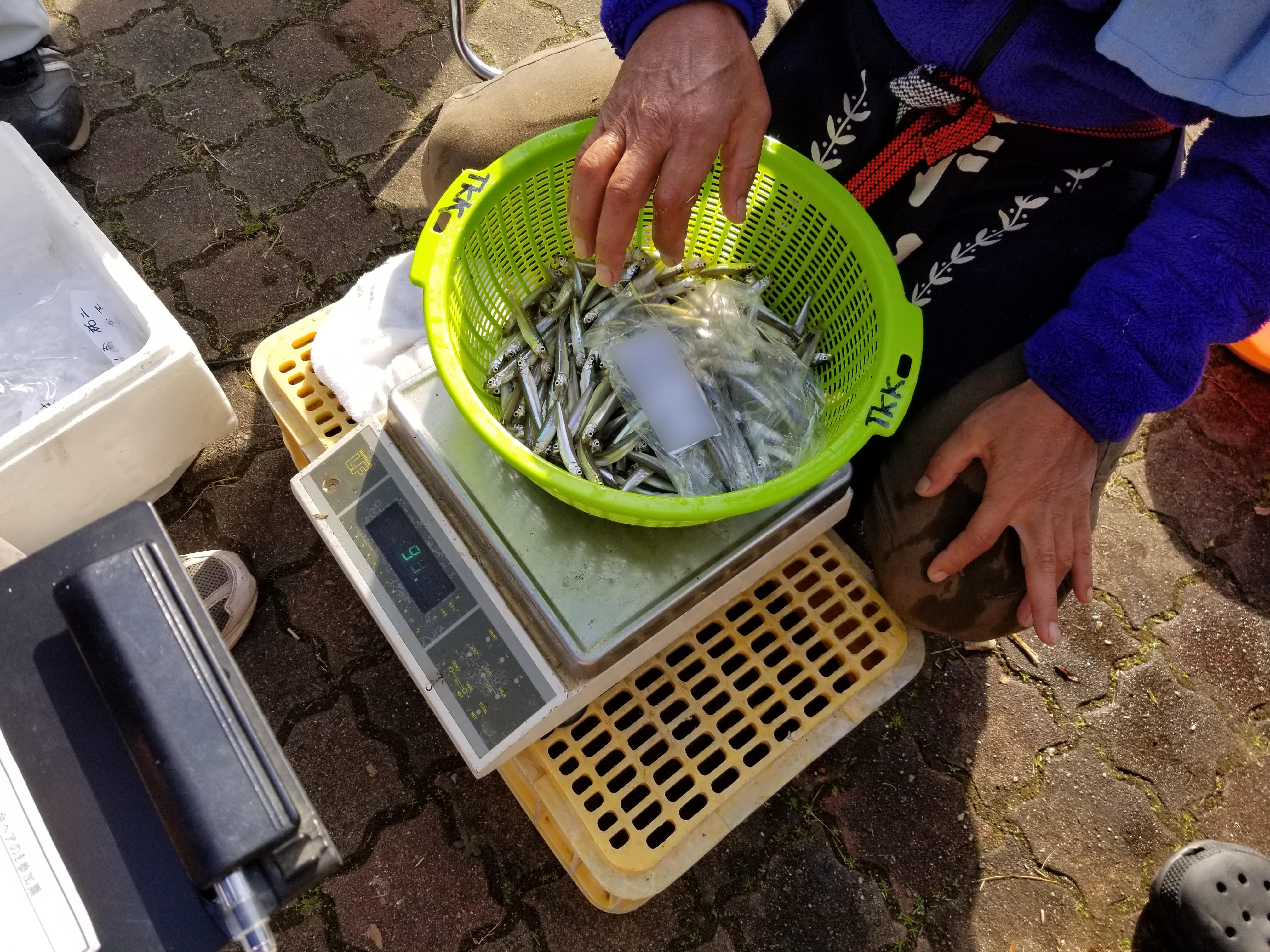 ワカサギ:2018高滝湖ワカサギ釣り大会参戦記