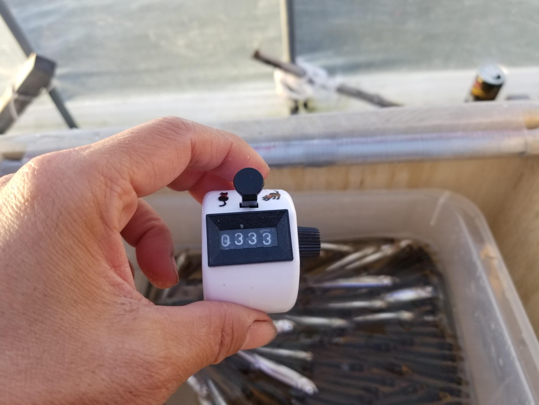 初めての高滝湖ドーム桟橋でのワカサギ釣り