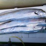 連休なので2Days釣行:Day1 金沢八景太田屋さんからタチウオジギング編